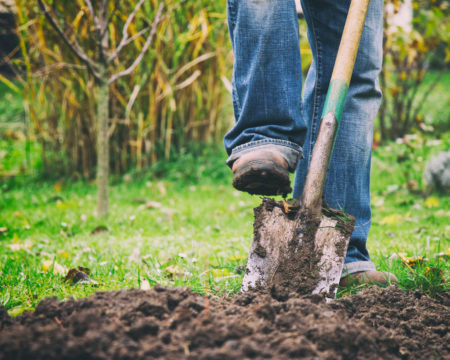 Digging in a garden with a spade