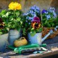 jardinage-juin