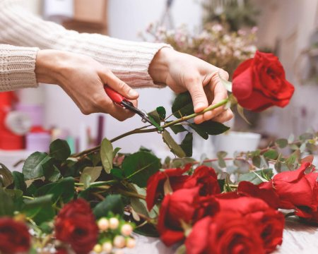 Flower shop seller prepares roses to create a bouquet by pruning them