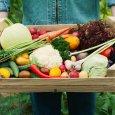 Farmer holding a basket full of harvest organic autumn vegetables.